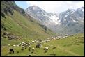 IMG_7005_Pyrenees