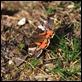 IMG_8479_Orange_Underwing