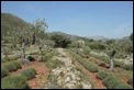 _MG_5939 lavender garden