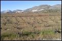 2013-12-22 12.13.01 Jalon vineyard