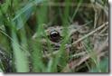 J15_0822 Froglet