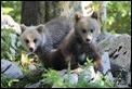 J16_1483 Cubs