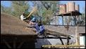 J17_0243 African thatchers