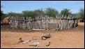 J17_0533 Himba coral