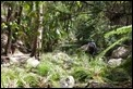 J19_2929 Carnarvon Gorge habitat